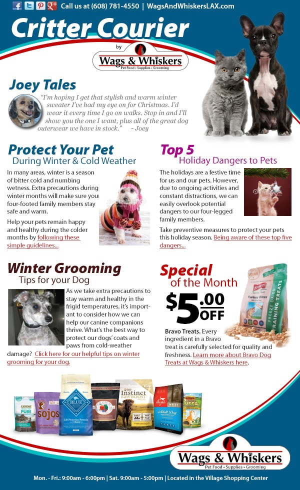 Wags and Whiskers e-newsletter design